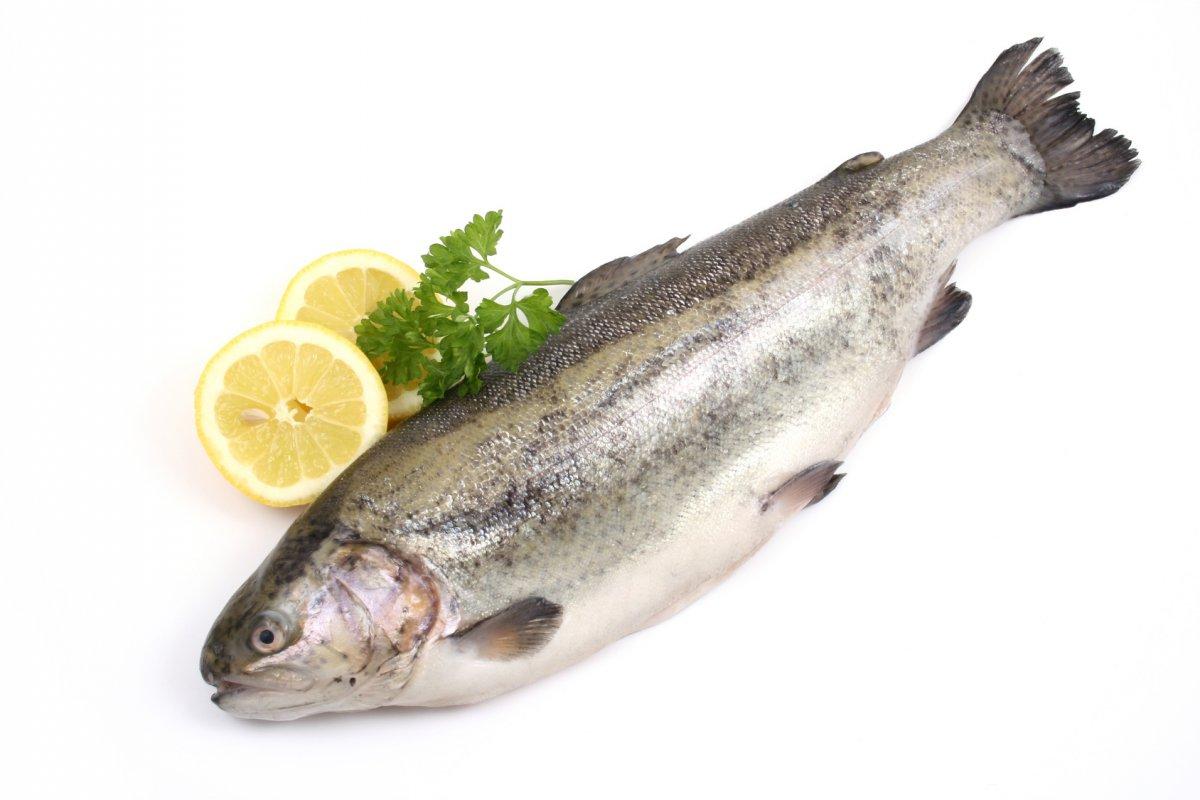 Cholesterin Fisch