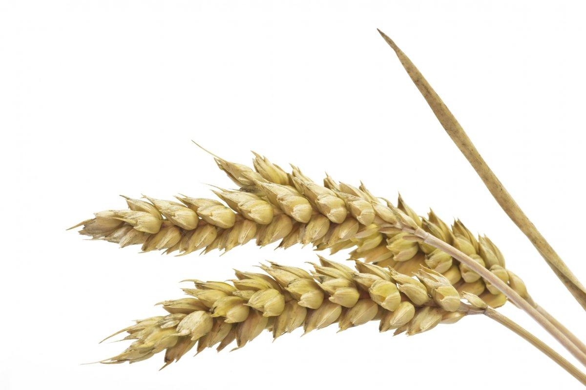 Getreide- und Weizen-Allergie   DELICARDO
